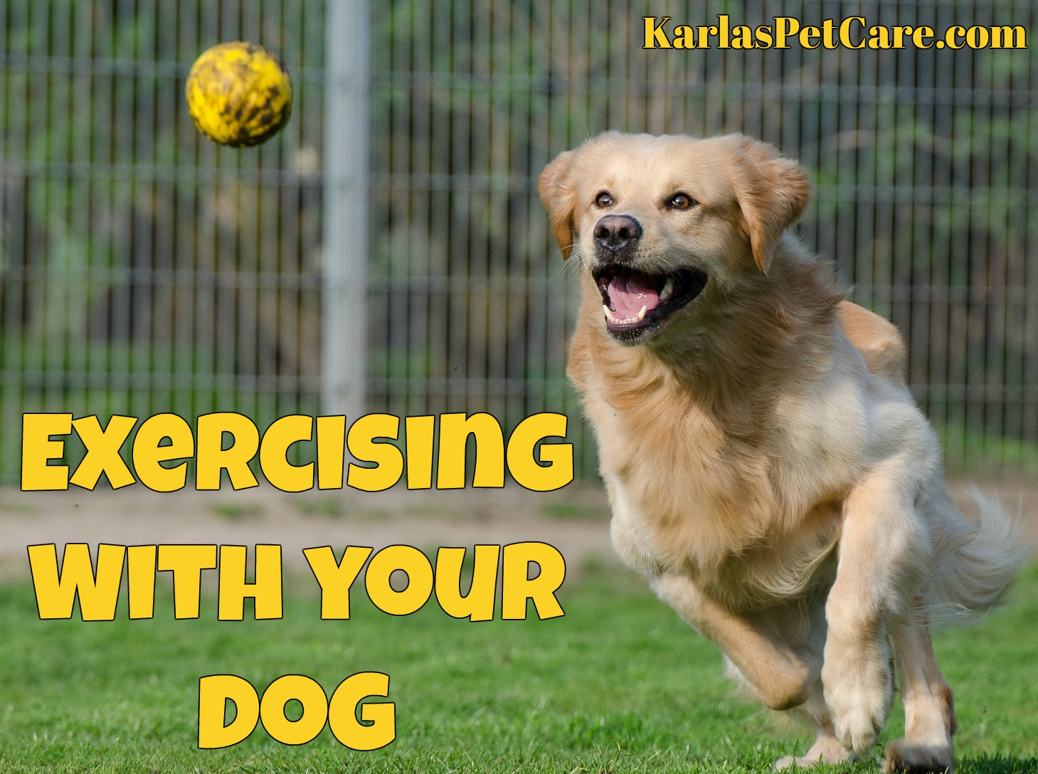karla - exercise dog pic
