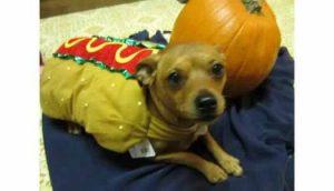 Karla's Pet Care Halloween Costume Contest