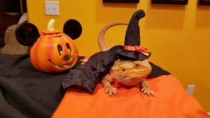Karla's Pet Care Pet Halloween Contest