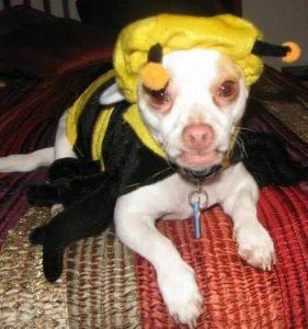 louie-as-a-bumble-bee-buzz-buzz-buzz